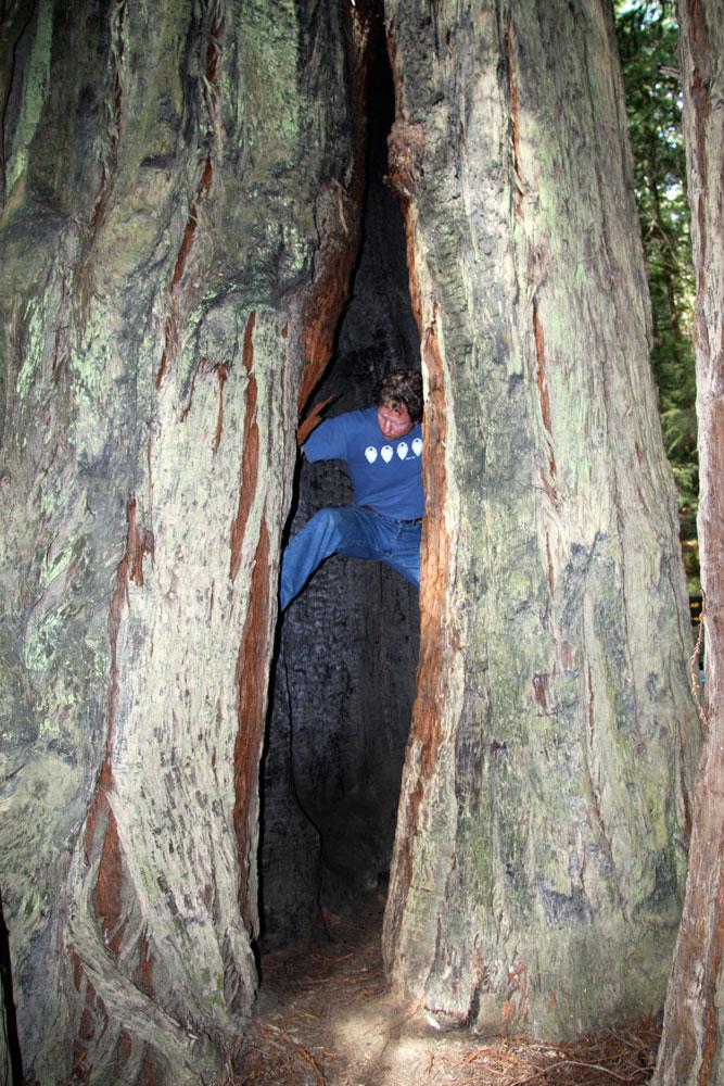 Redwood Cave Renaissance Tree Care